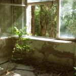 Pripyat - Tree