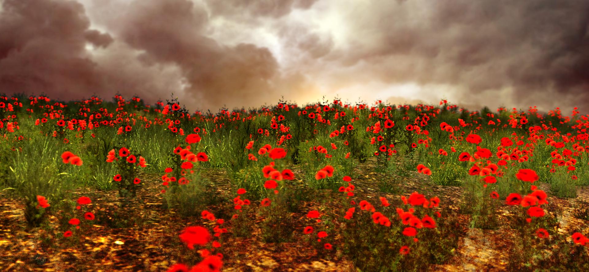 Poppy Flower Field - Of Secrets